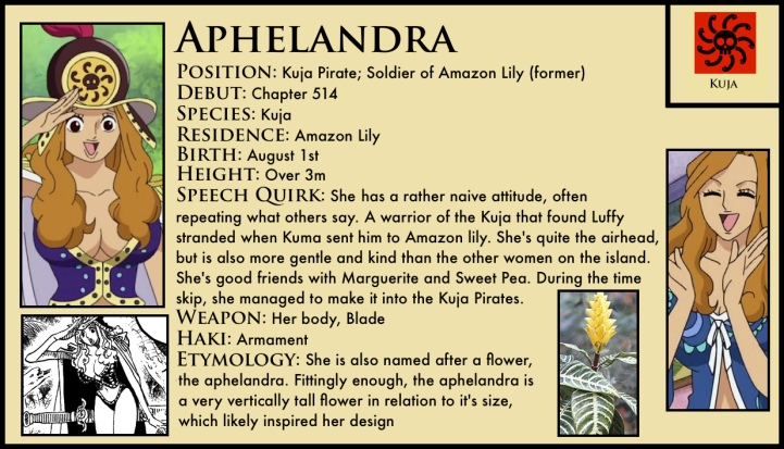 Aphelandra_one_piece